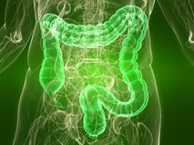 Healthy colon Stock Photo