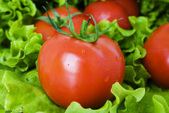 Healthy combination of lettuce and tomato Royalty Free Stock Images