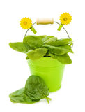 Healthy cooking with fresh spinach. Healthy cooking - fresh spinach leaves in garden green bucket. Clipping path inluded. Isolated over white background stock image