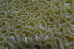 Healthy Coral off Balicasag Island, Philippines Stock Photo
