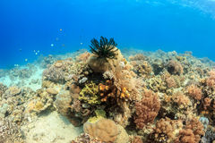 Healthy coral reef Stock Photography