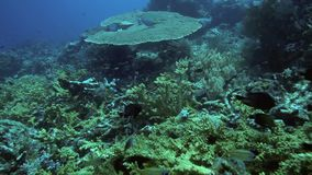 Healthy coral reef ecosystem stock footage