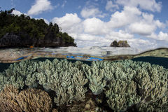 Healthy Coral Reef and Islands. Soft corals thrive on a shallow reef in Raja Ampat, Indonesia. The islands of Raja Ampat are within the Coral Triangle and harbor Royalty Free Stock Image