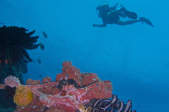 Healthy Coral Reef life off Balicasag Island, Panglao, Bohol, Philippines Royalty Free Stock Image