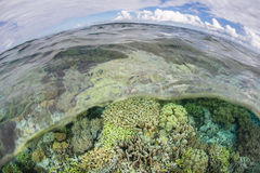 Healthy Coral Reef and Sky Stock Image