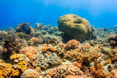 Healthy coral reef Royalty Free Stock Photography