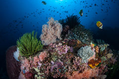 Healthy Coral Reef in Tropical Pacific Stock Images