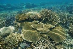 Healthy coral reef underwater Pacific ocean Royalty Free Stock Photos