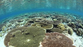 Healthy Corals Growing in Shallow Water stock video footage