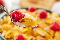 Healthy Cornflake Cereal Royalty Free Stock Photo