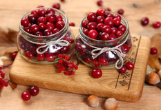 Healthy cranberry Royalty Free Stock Photography