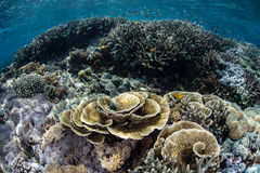 Healthy Delicate Corals Stock Images
