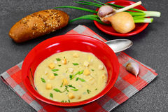 Healthy, diet food: Cream soup with mushrooms and vegetables wit. H croutons and herbs. Studio Photo stock photography