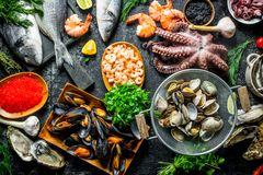 Healthy diet food. A variety of fresh seafood. On rustic background stock images