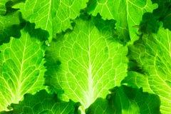 Fresh Lettuce /  green leaves background / makro Royalty Free Stock Images