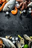 Healthy diet of seafood on ice. On black rustic background royalty free stock photos