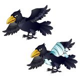 Healthy and diseased crow isolated on white background. Vector cartoon close-up illustration. Healthy and diseased crow isolated on white background. Vector Stock Images