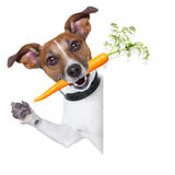 Healthy dog with a carrot Royalty Free Stock Image