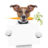 Healthy dog with a carrot. Holding a blank banner Stock Photography