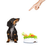 Healthy dog with food bowl and owner Stock Photography