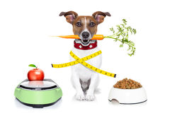 Healthy dog Royalty Free Stock Images