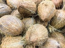 Healthy Eating: Assembled mature coconuts background. Studio Photo Stock Photo