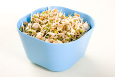 Healthy eating beans. Mung beans on white background Stock Images