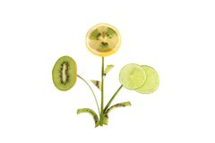 Healthy eating. Bush flowers made of orange lemon kiwi Stock Photography