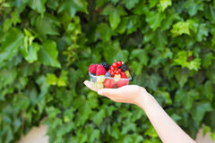 Healthy eating, dieting, vegetarian food and people concept - close up of woman hands holding berries outdoor.  Royalty Free Stock Images