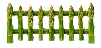Healthy Eating Fence. Healthy eating picket fence border design element isolated on a white background as a group of asparagus vegetables as for good nutrition Royalty Free Stock Image