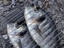 Healthy eating. Fresh gilt-head bream fish prepared for BBQ Royalty Free Stock Photo