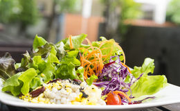 Healthy. Eating with hydroponics salad Stock Photos