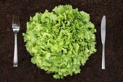 Healthy eating lettuce in vegetable garden. Healthy vegetarian eating organic lettuce in vegetable garden in nature royalty free stock images
