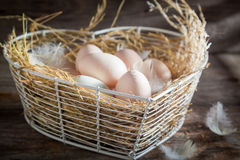 Healthy and ecological eggs from the farm Stock Images
