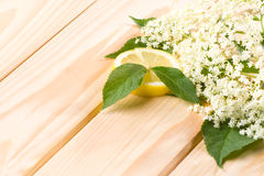 Healthy elder flower Stock Photography