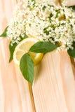 Healthy elder flower Stock Photos