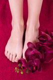 Healthy and elegant female feet with the orchid Royalty Free Stock Photography