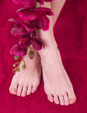 Healthy and elegant female feet with the orchid Royalty Free Stock Images