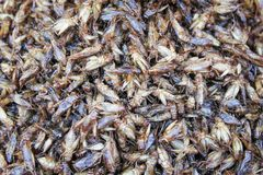 Healthy exotic food fried insects in local street market in Thailand , cricke or acheta domestica stock photo