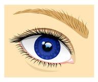 Healthy eye Stock Image