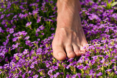 Healthy feet: feet and flowers Stock Photo