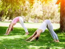 Young women exercising in the park. Healthy and fit young women doing yoga in the park Royalty Free Stock Images