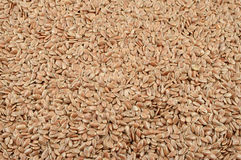 Healthy flax seeds Stock Image