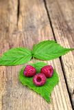 Three fresh raspberries on leaves. Healthy food,agriculture,harvest and fruit concept: three fresh raspberries on leaves and an old wooden background Royalty Free Stock Image