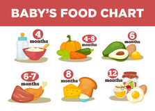 Healthy food for babies in different age. Information with healthy nutrition for child. Vector set with illustration. Cartoon infographic elements isolated on Stock Photography