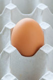 Healthy food brown chicken egg Stock Photos