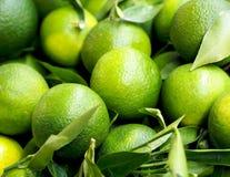 Healthy food - close view of unripe green mandarins att Spanish farm market. Spain Royalty Free Stock Photos
