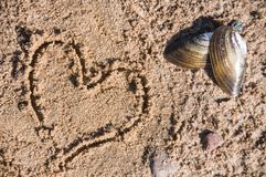 Seashell on sand. Delicious. Healthy food. stock images