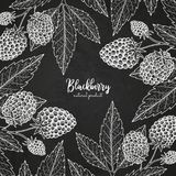 Healthy food design template with berries. Hand drawn frame with blackberry. Summer or autumn template on chalkboard. Great for label, design menu, recipes Stock Photo