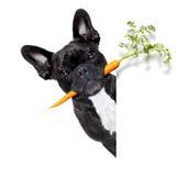Healthy food dog Stock Photos